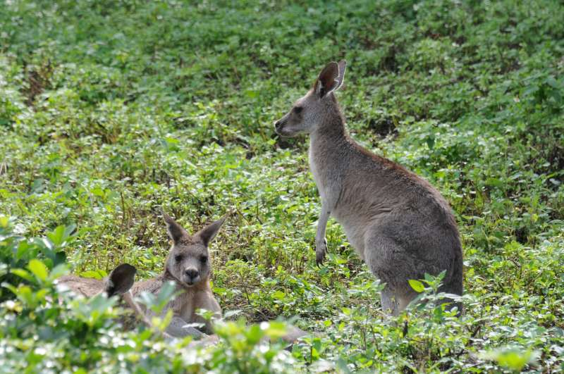 澳洲動物區